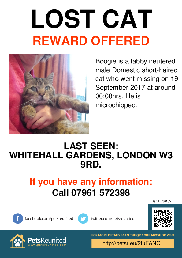 Lost pet poster - Lost cat: Tabby cat called Boogie