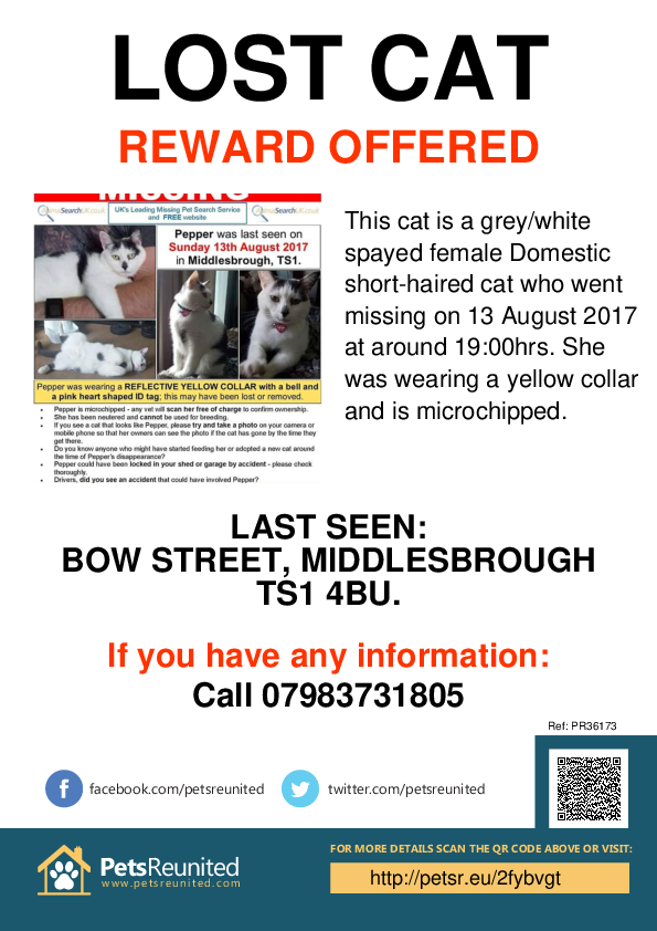 Lost pet poster - Lost cat: Grey/White cat [name witheld]