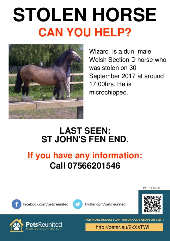 Stolen pet poster - Stolen horse: Dun  Welsh Section D horse called Wizard