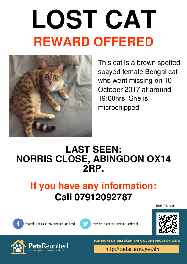 Lost pet poster - Lost cat: Brown Spotted Bengal cat [name witheld]