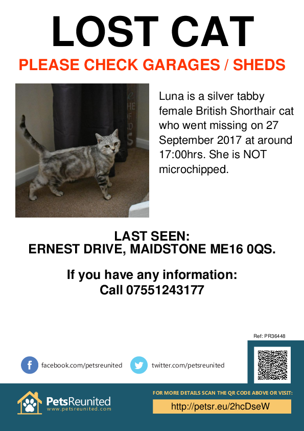 Lost pet poster - Lost cat: Silver Tabby British Shorthair cat called Luna
