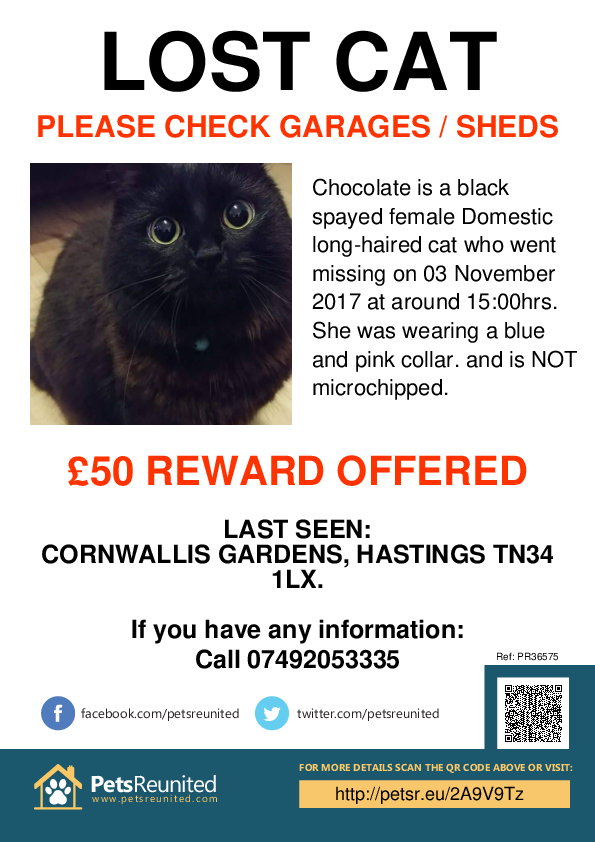 Lost pet poster - Lost cat: Black cat called Chocolate