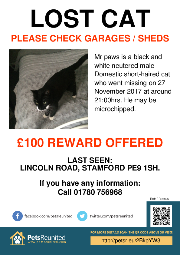 Lost pet poster - Lost cat: Black and white cat called Mr paws