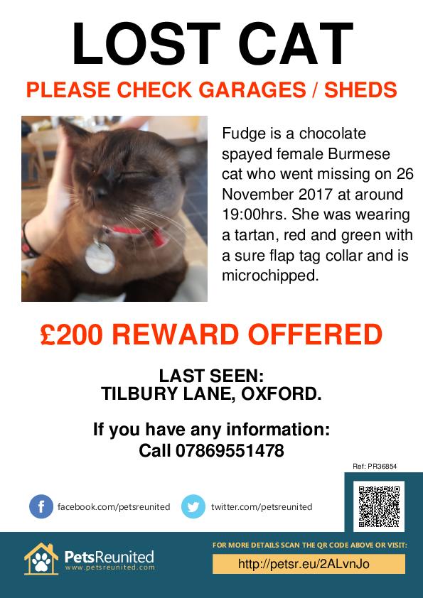 Lost pet poster - Lost cat: Chocolate Burmese cat called Fudge