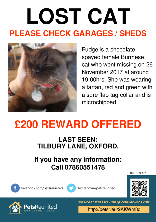 Lost pet poster - Lost cat: Chocolate Burmese cat called Fudge