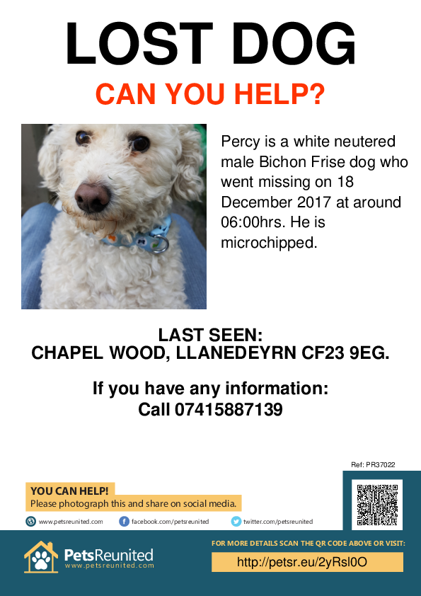 Lost pet poster - Lost dog: White Bichon Frise dog called Percy
