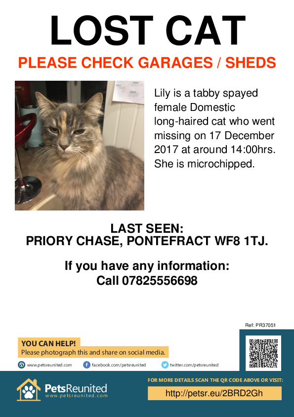 Lost pet poster - Lost cat: Tabby cat called Lily