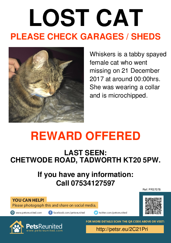 Lost pet poster - Lost cat: Tabby cat called Whiskers
