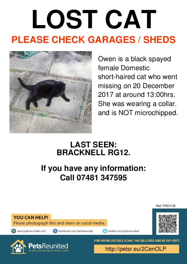 Lost pet poster - Lost cat: Black cat called Owen