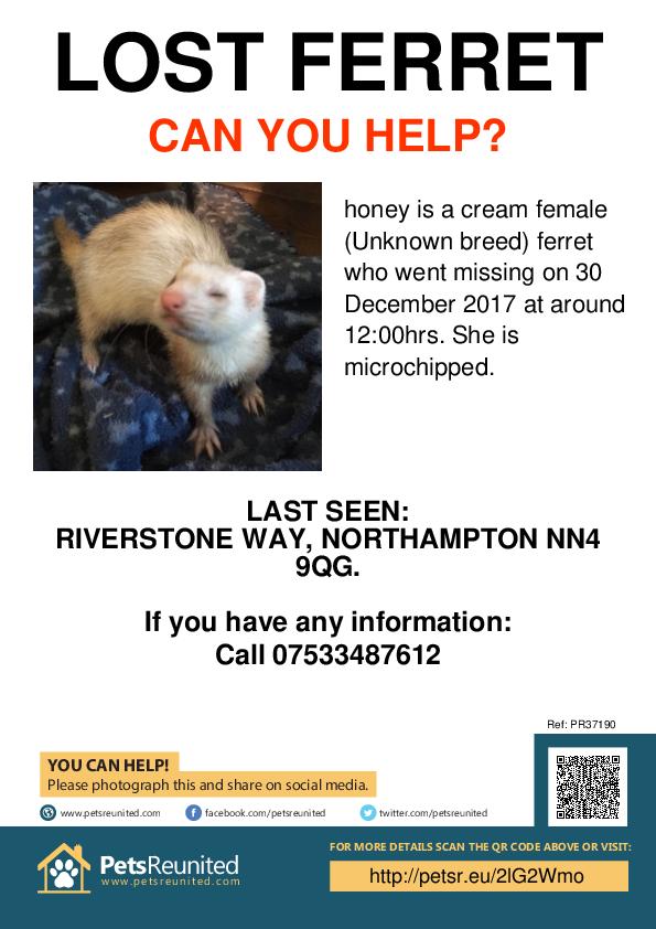 Lost pet poster - Lost ferret: cream  ferret called honey