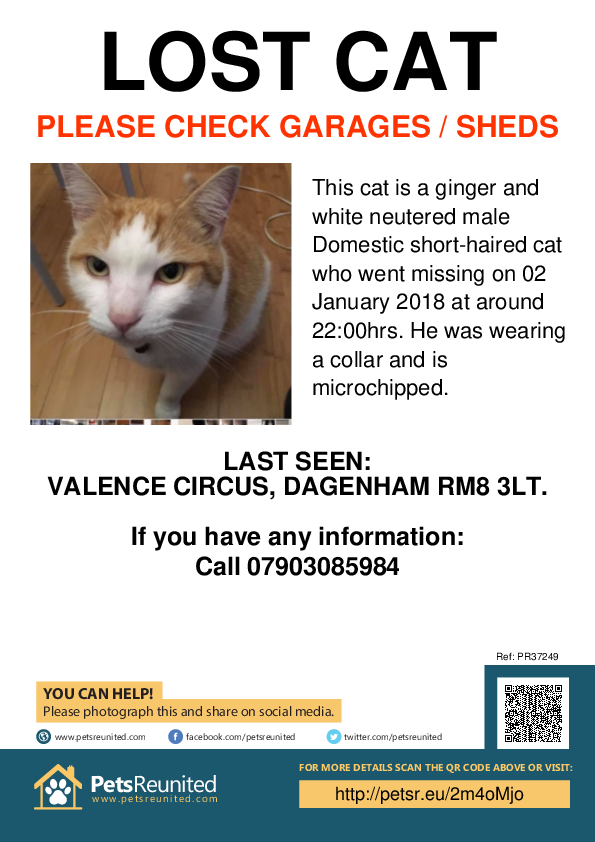 Lost pet poster - Lost cat: Ginger and white cat [name witheld]