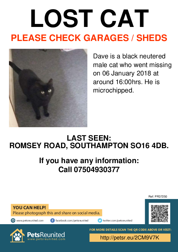 Lost pet poster - Lost cat: Black cat called Dave