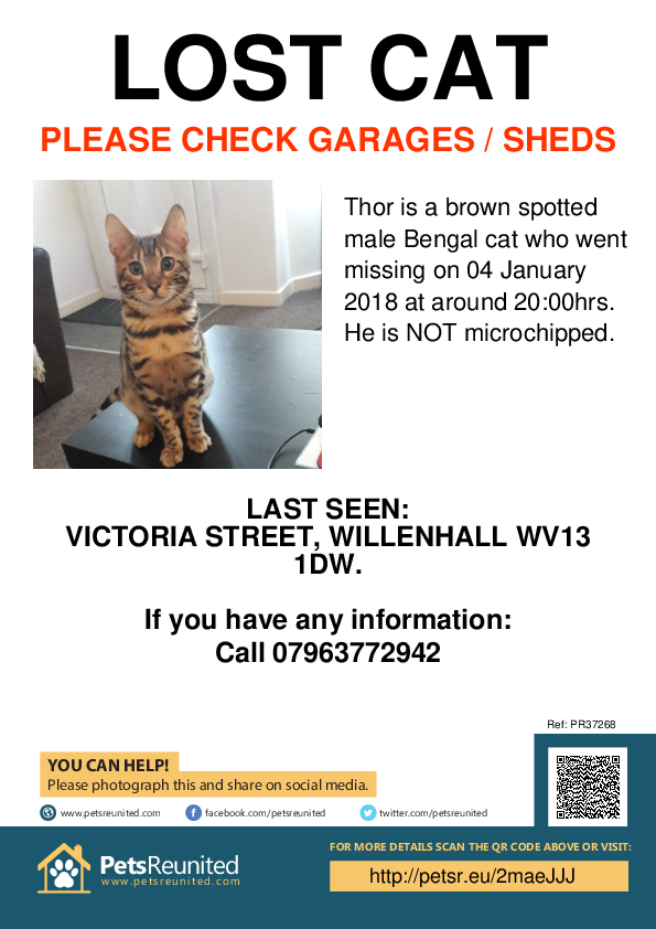 Lost pet poster - Lost cat: Brown Spotted Bengal cat called Thor