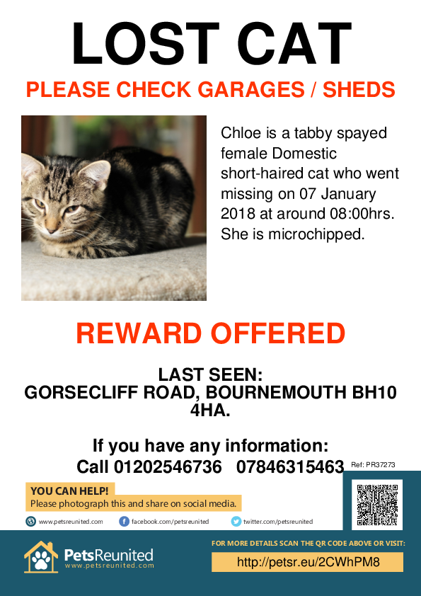 Lost pet poster - Lost cat: Tabby cat called Chloe