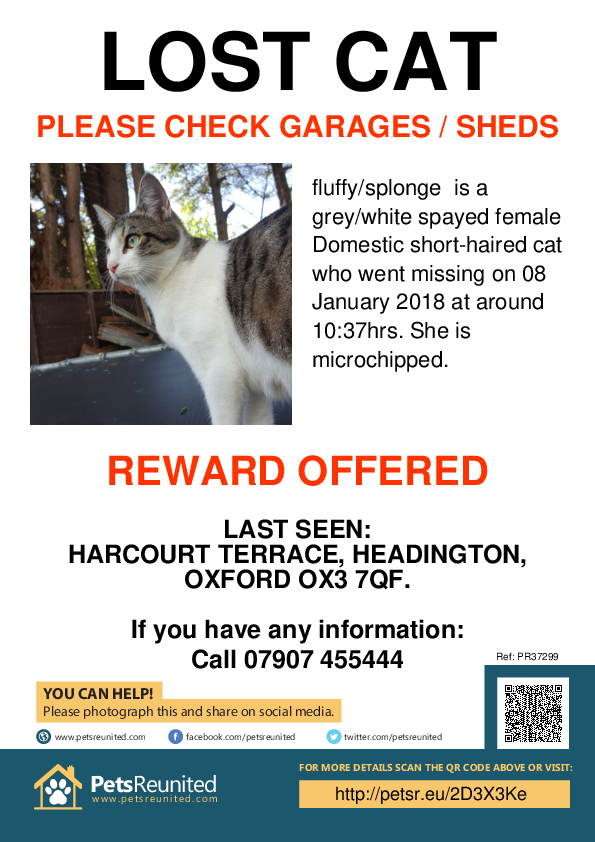 Lost pet poster - Lost cat: Grey/White cat called fluffy/splonge