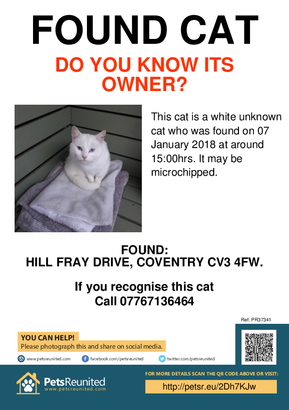 Found pet poster - Found cat: white cat