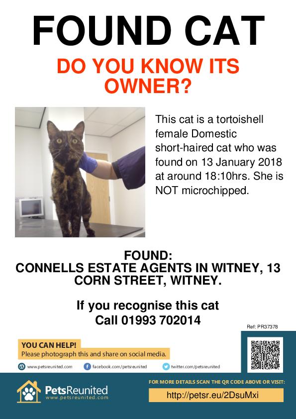 Found pet poster - Found cat: Tortoishell cat