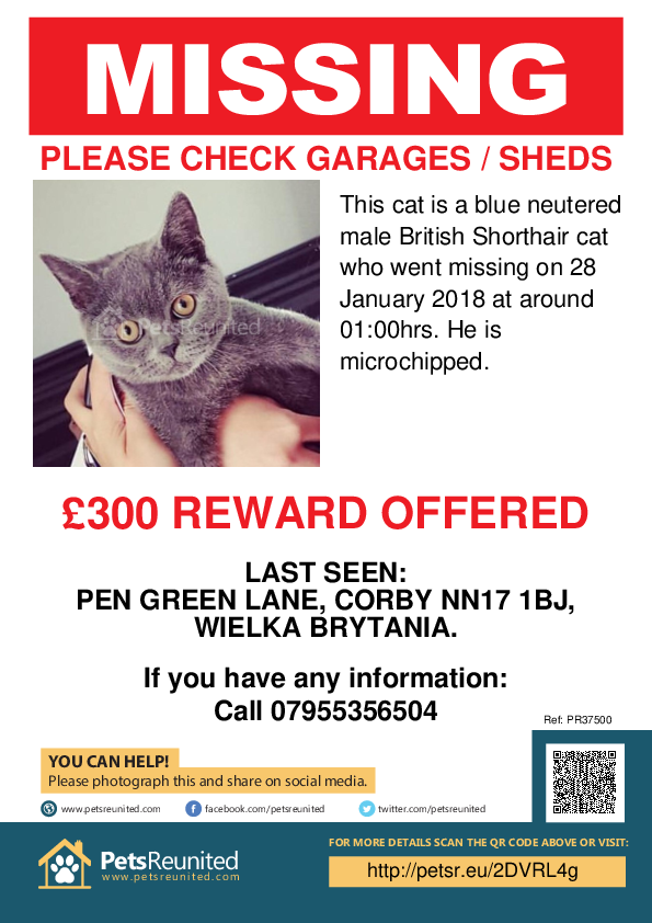 Lost pet poster - Lost cat: Blue British Shorthair cat [name witheld]