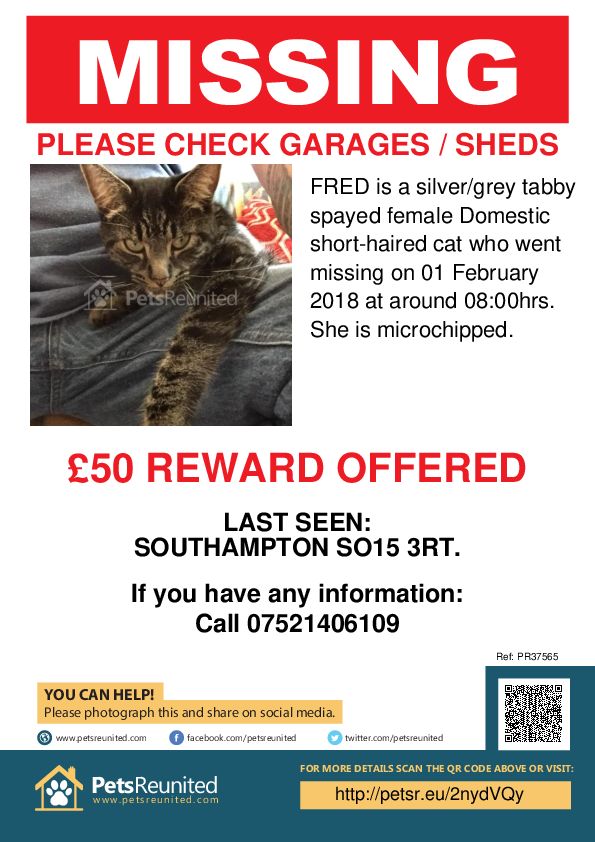 Lost pet poster - Lost cat: Silver/Grey Tabby cat called FRED