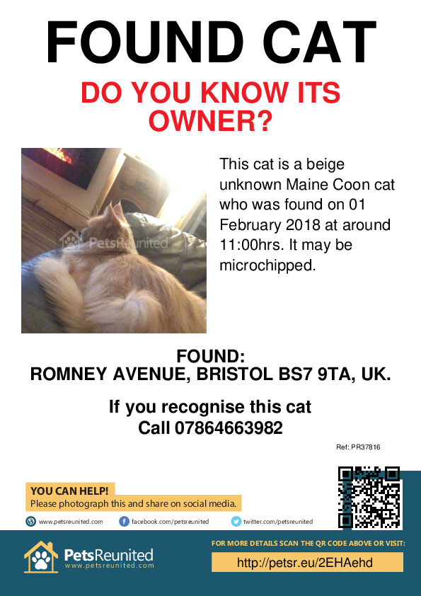 Found pet poster - Found cat: Beige  Maine Coon cat