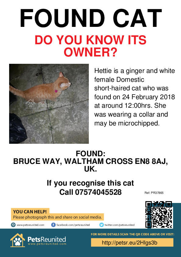 Found pet poster - Found cat: Ginger and white cat called Hettie