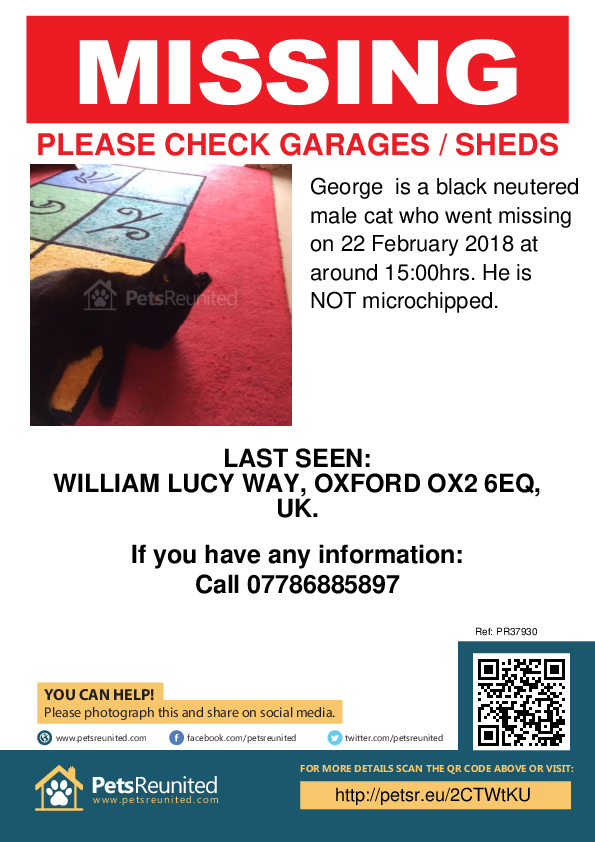 Lost pet poster - Lost cat: Black cat called George