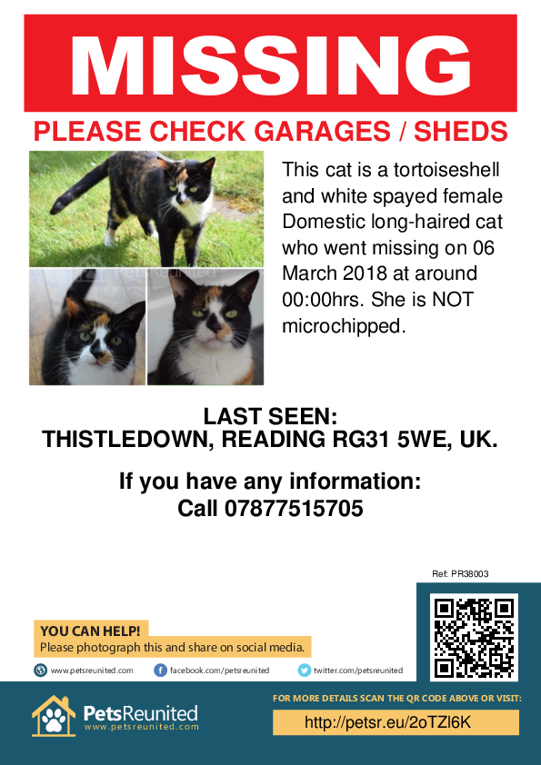 Lost pet poster - Lost cat: Tortoiseshell and white cat [name witheld]