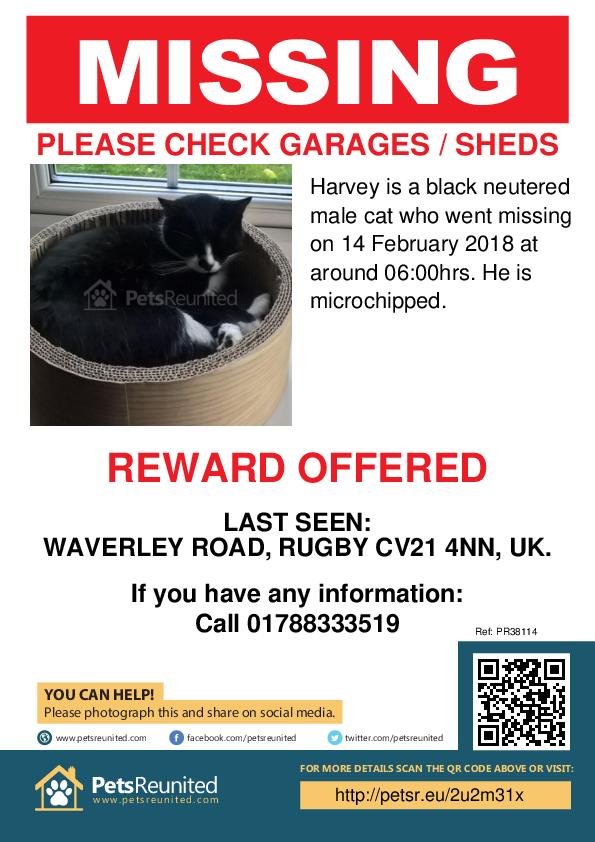 Lost pet poster - Lost cat: black cat called Harvey