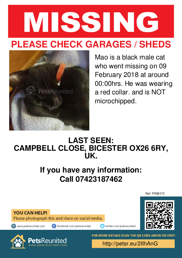 Lost pet poster - Lost cat: Black cat called Mao