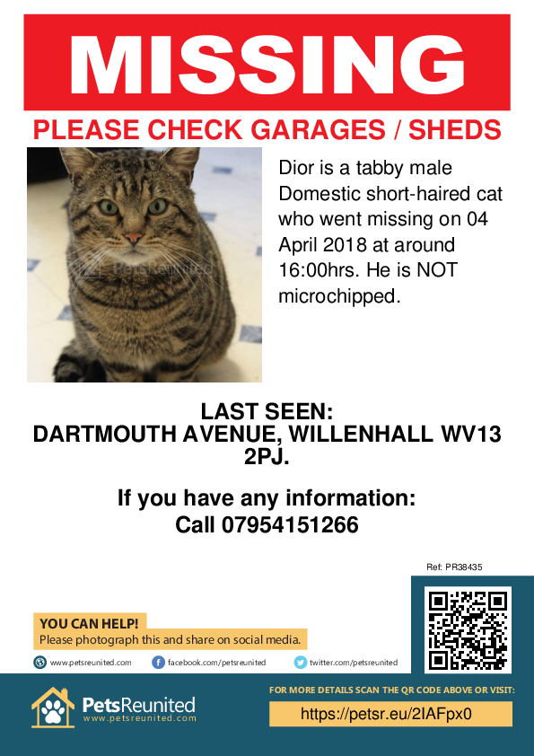 Lost pet poster - Lost cat: Tabby cat called Dior
