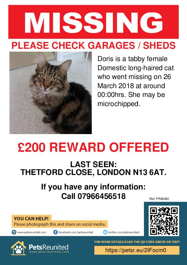 Lost pet poster - Lost cat: Tabby cat called Doris