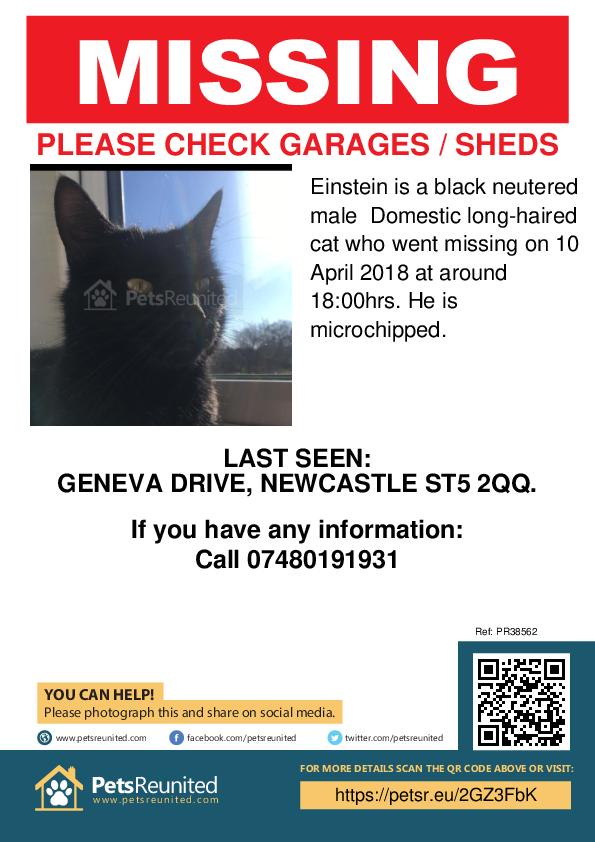 Lost pet poster - Lost cat: Black cat called Einstein