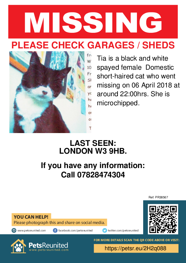Lost pet poster - Lost cat: Black and white cat called Tia