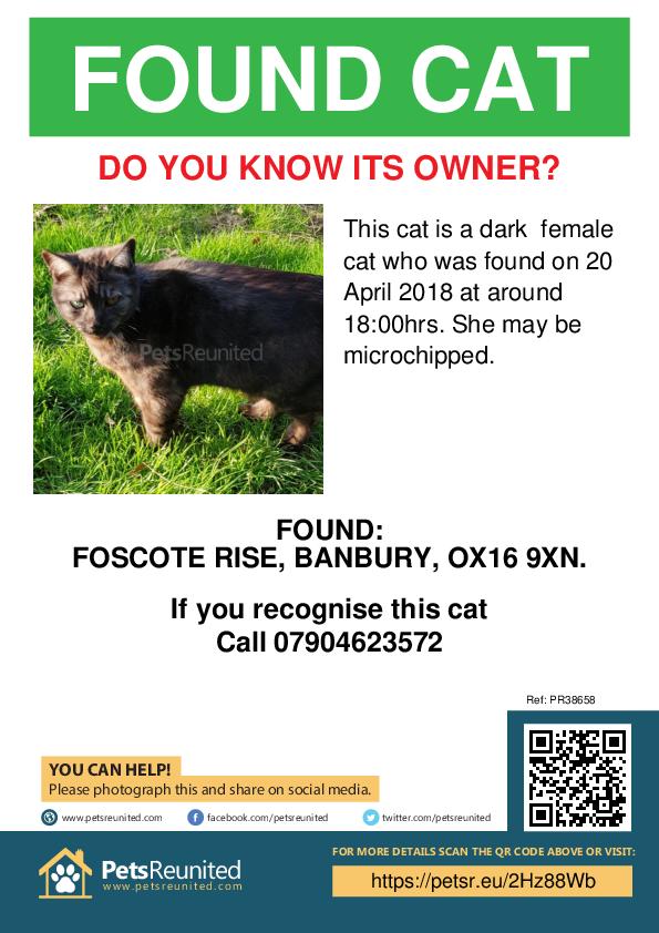 Found pet poster - Found cat: dark  cat