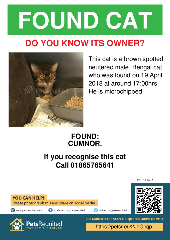 Found pet poster - Found cat: Brown Spotted Bengal cat