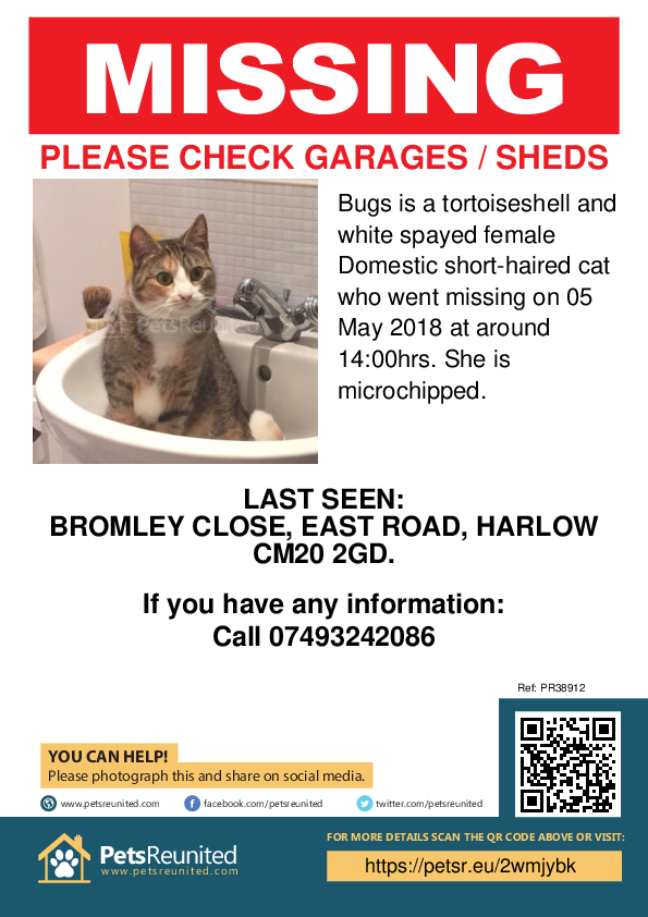 Lost pet poster - Lost cat: Tortoiseshell and white cat called Bugs