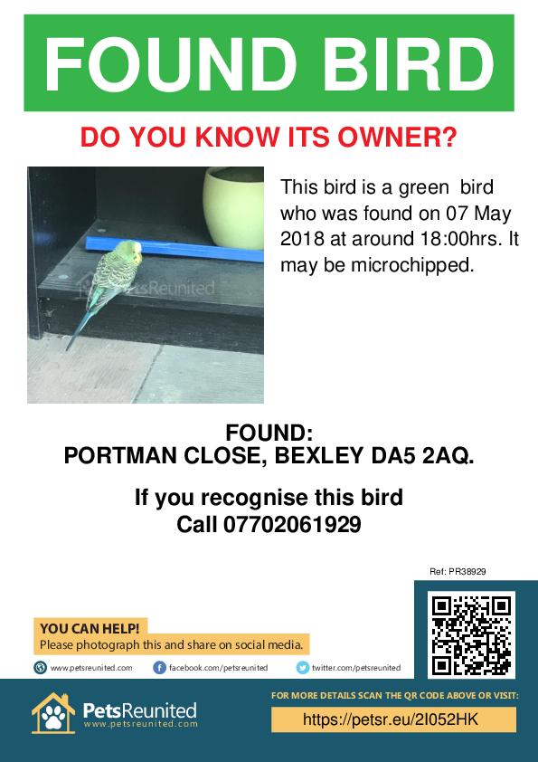 Found pet poster - Found bird: Green bird
