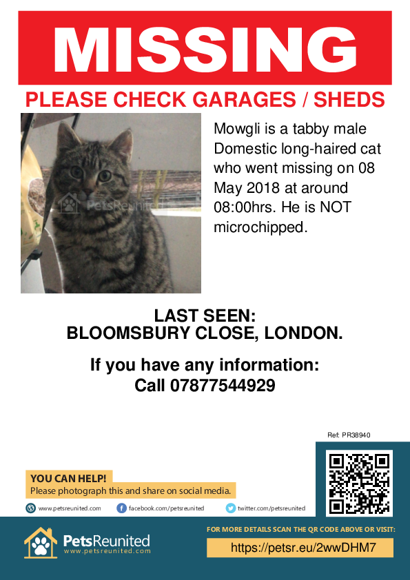 Lost pet poster - Lost cat: Tabby cat called Mowgli