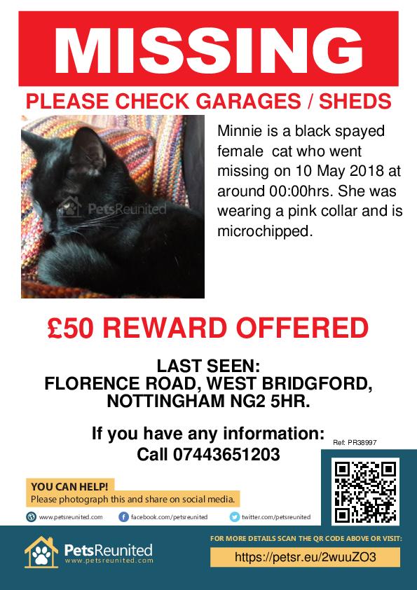 Lost pet poster - Lost cat: Black cat called Minnie