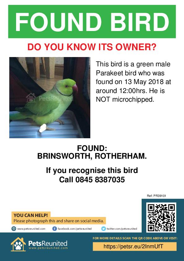 Found pet poster - Found bird: Green Parakeet bird