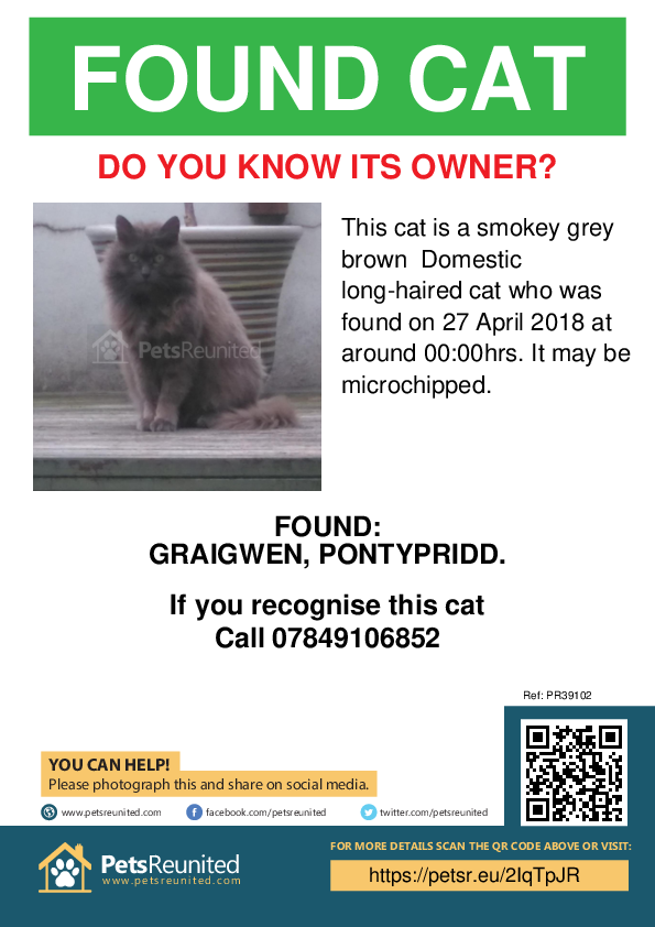 Found pet poster - Found cat: Smokey Grey brown cat
