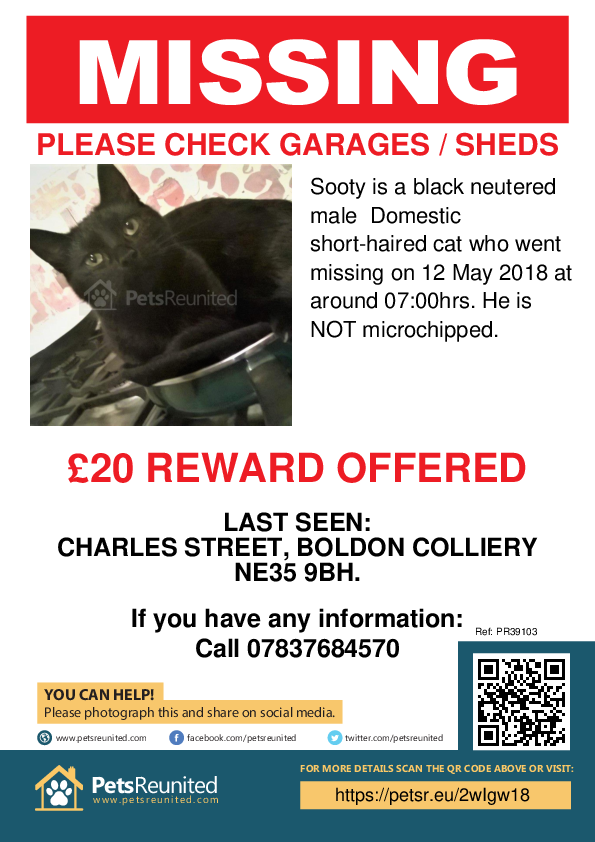 Lost pet poster - Lost cat: Black cat called Sooty