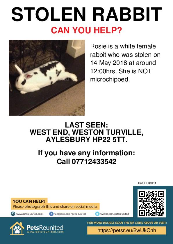 Stolen pet poster - Stolen rabbit: White rabbit called Rosie