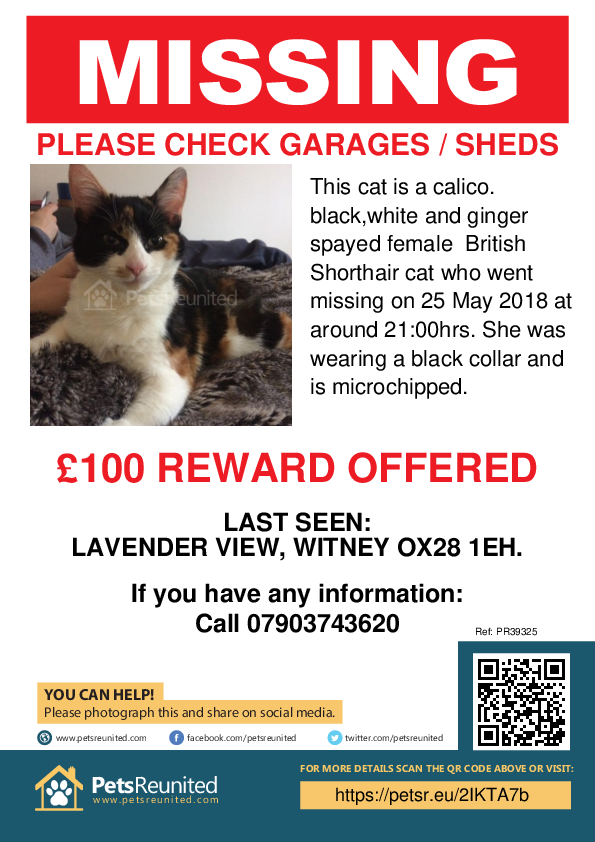 Lost pet poster - Lost cat: Calico. Black,white and ginger British Shorthair cat [name witheld]