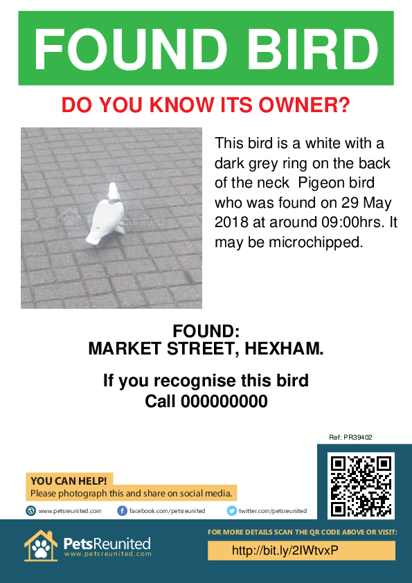 Found pet poster - Found bird: White with a dark grey ring on the back of the neck Pigeon bird