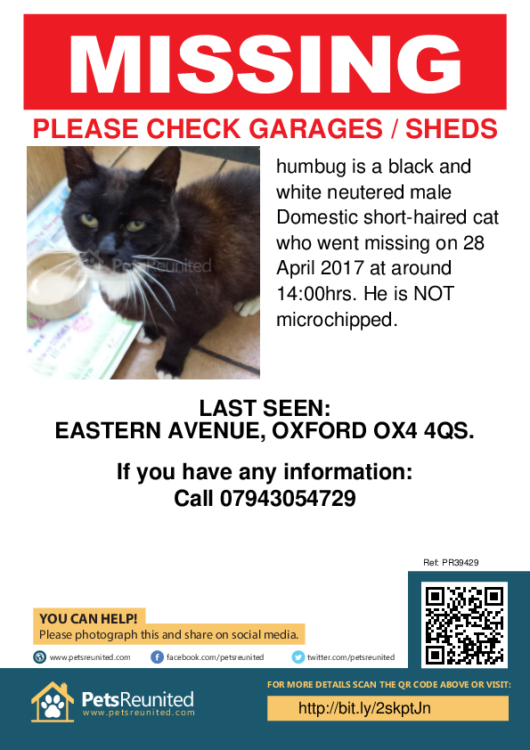 Lost pet poster - Lost cat: Black and white cat called humbug