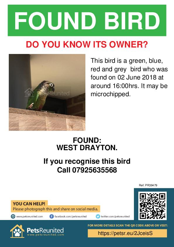 Found pet poster - Found bird: Green, blue, red and grey bird