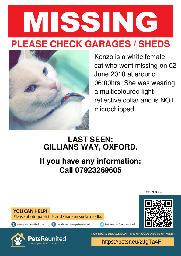 Lost pet poster - Lost cat: White cat called Kenzo