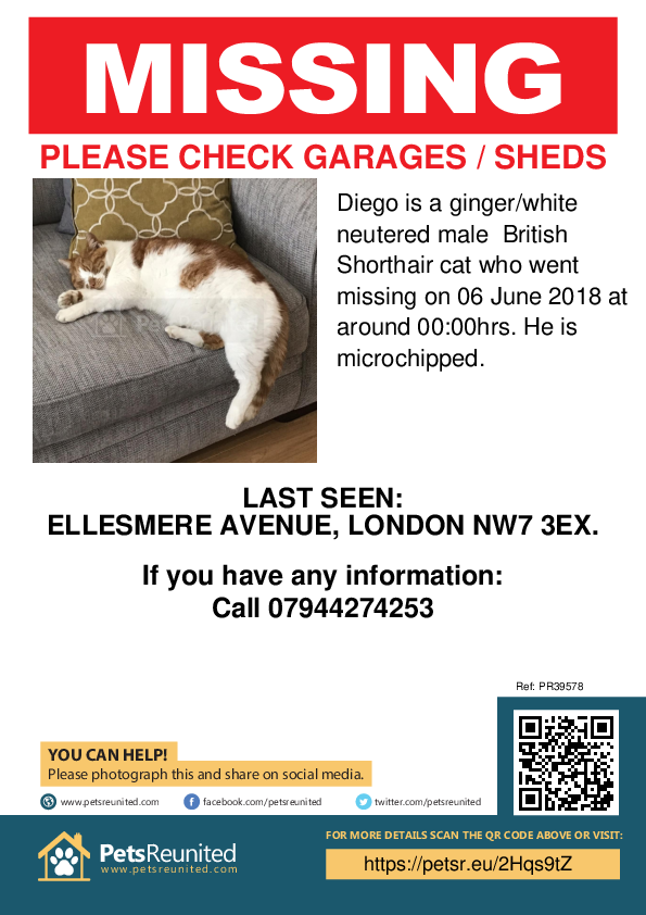 Lost pet poster - Lost cat: Ginger/white British Shorthair cat called Diego
