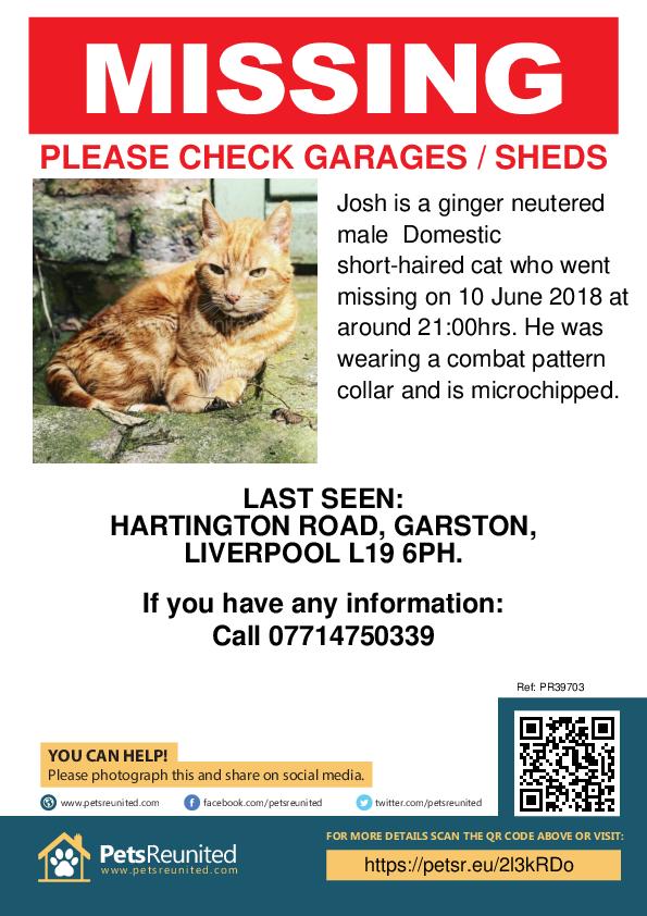 Lost pet poster - Lost cat: Ginger cat called Josh